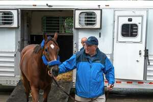 Bells the One is lead from the horse trailer by trainer Neil Pessin after a trip from Arlington Park in Chicago to make her first appearance  in the Honorable Miss on Wednesday at The Saratoga Race Course Sunday July 25, 2021 in Saratoga Springs, N.Y.    Photo by Skip Dickstein