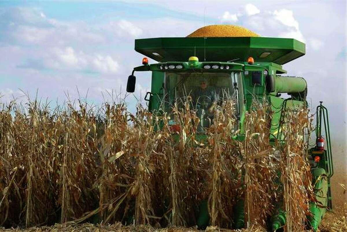 A farmer harvests corn in Loami.
