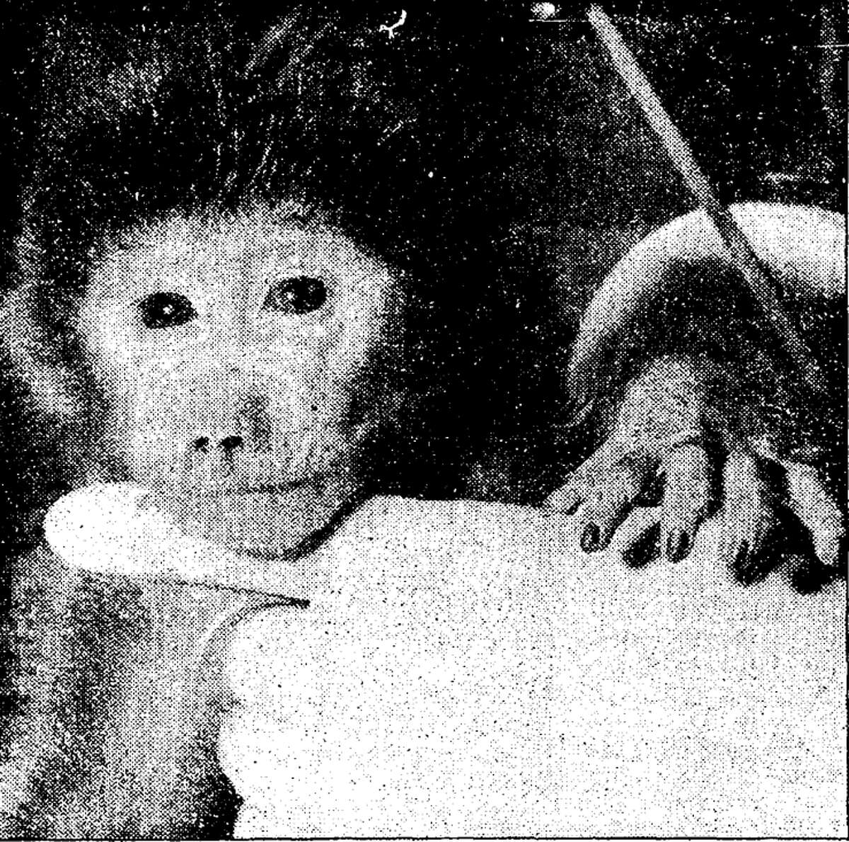 E.T., the world's first test tube primate, was born 38 years ago this week in San Antonio. E.T. was 18 hours old in this photo and was born at the Southwest Foundation for Research and Education.