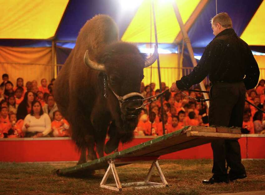 Tatanka, an American Buffalo, performs at the annual Elizabeth M. Pfriem Circus at Beardsley Park in Bridgeport on Wednesday, September 15, 2010.