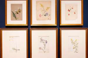 """Emily Cole and Isabel Charlotte Church, Flower Studies, 1870s-1890s. Watercolor and pencil on paper. At """"Cross Pollination: Heade, Cole, Church & Our Contemporary Moment."""" Photo Wm Jaeger"""