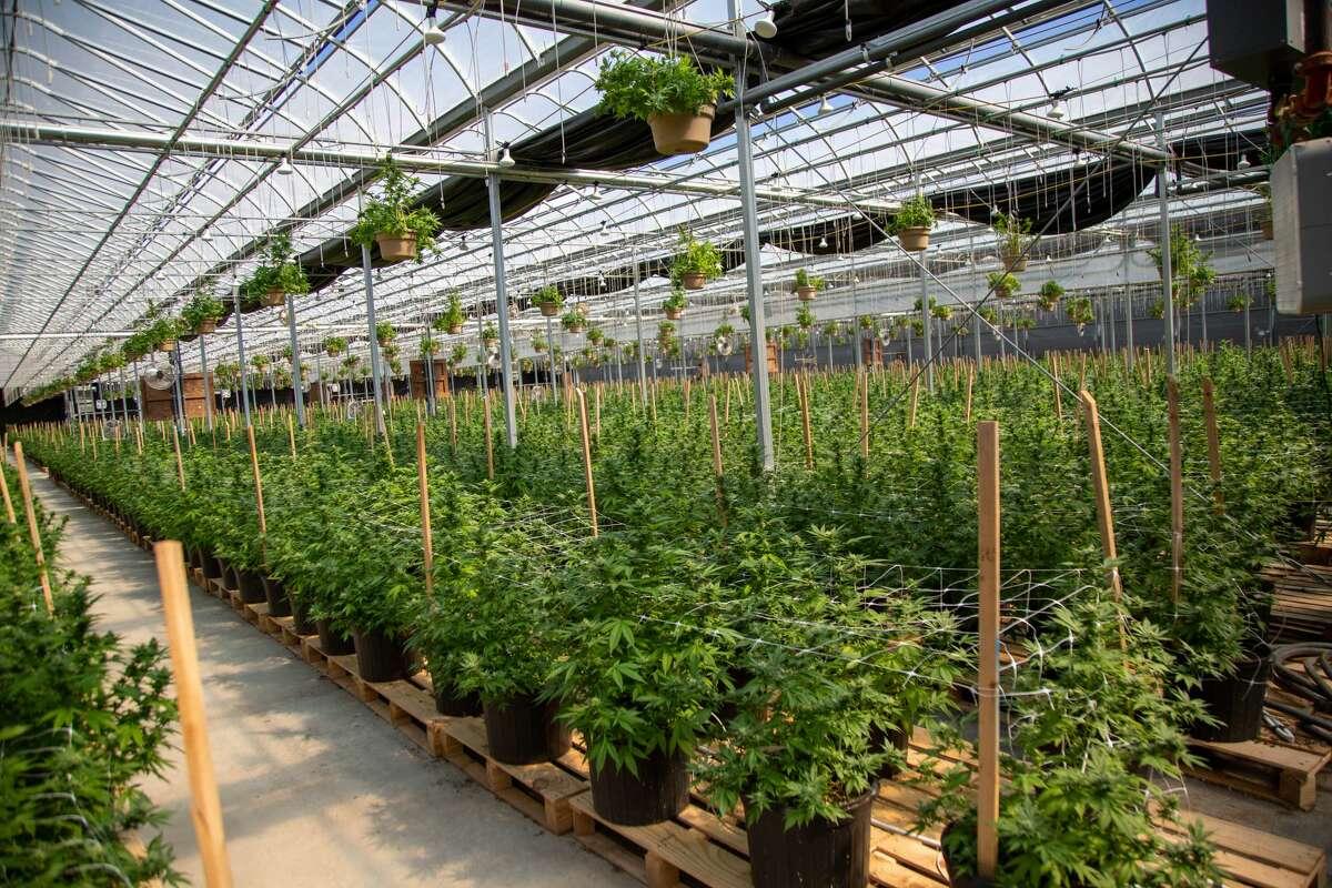 An indoor grow. (Hempire State Growers)