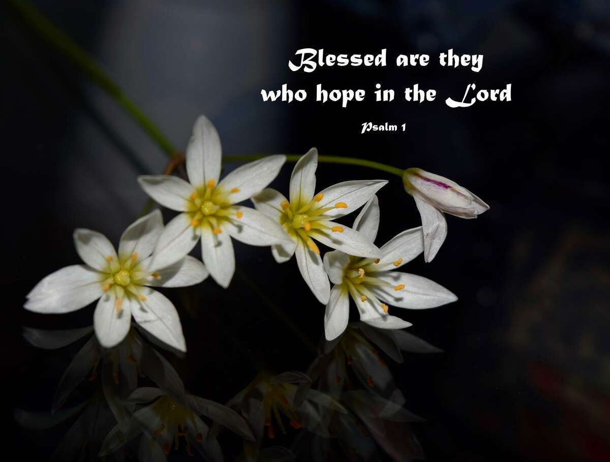 Wildflowers on a dark background with the bible verse: Blessed are they who hope in the Lord. - Psalm 1.