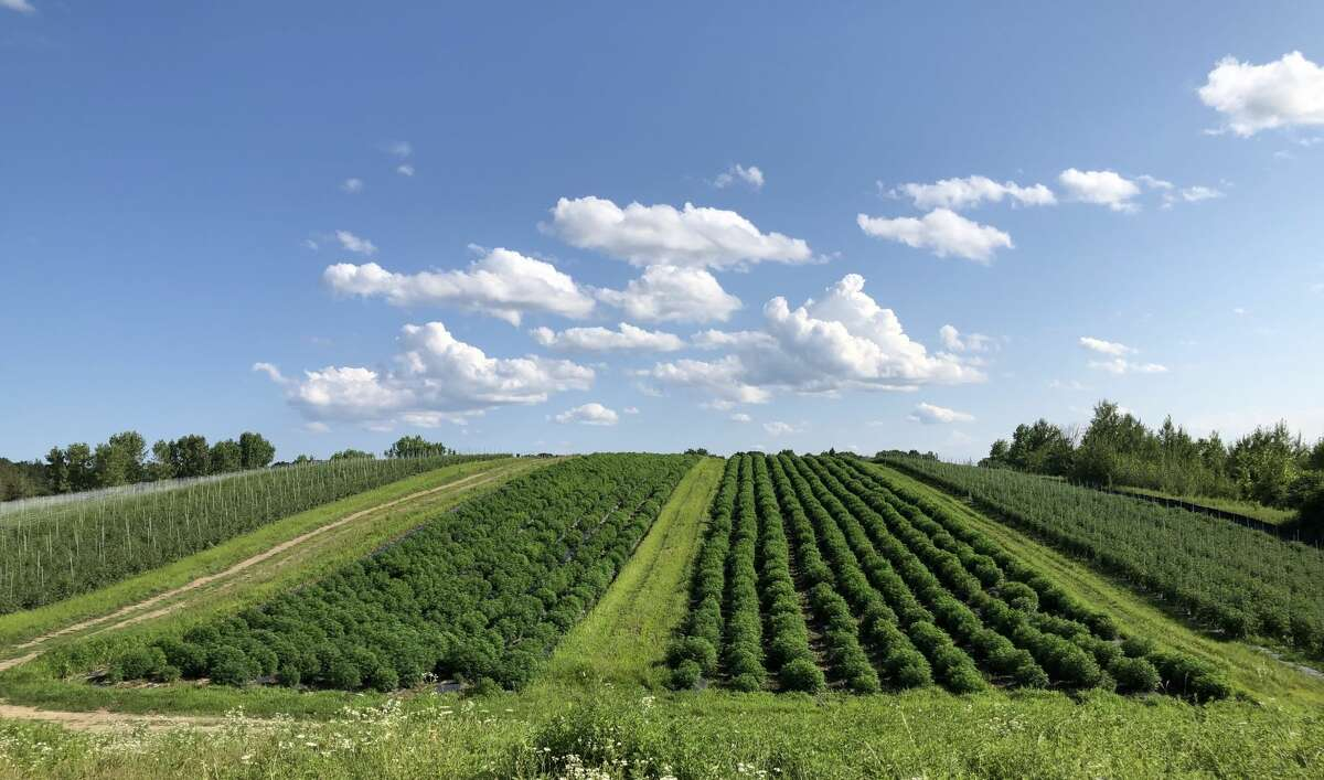 A shot of the Hempire State Growers' fields in Hudson Valley. Besides their hemp crops, Hepworth Farms also grows organic vegetables. (Provided photo)