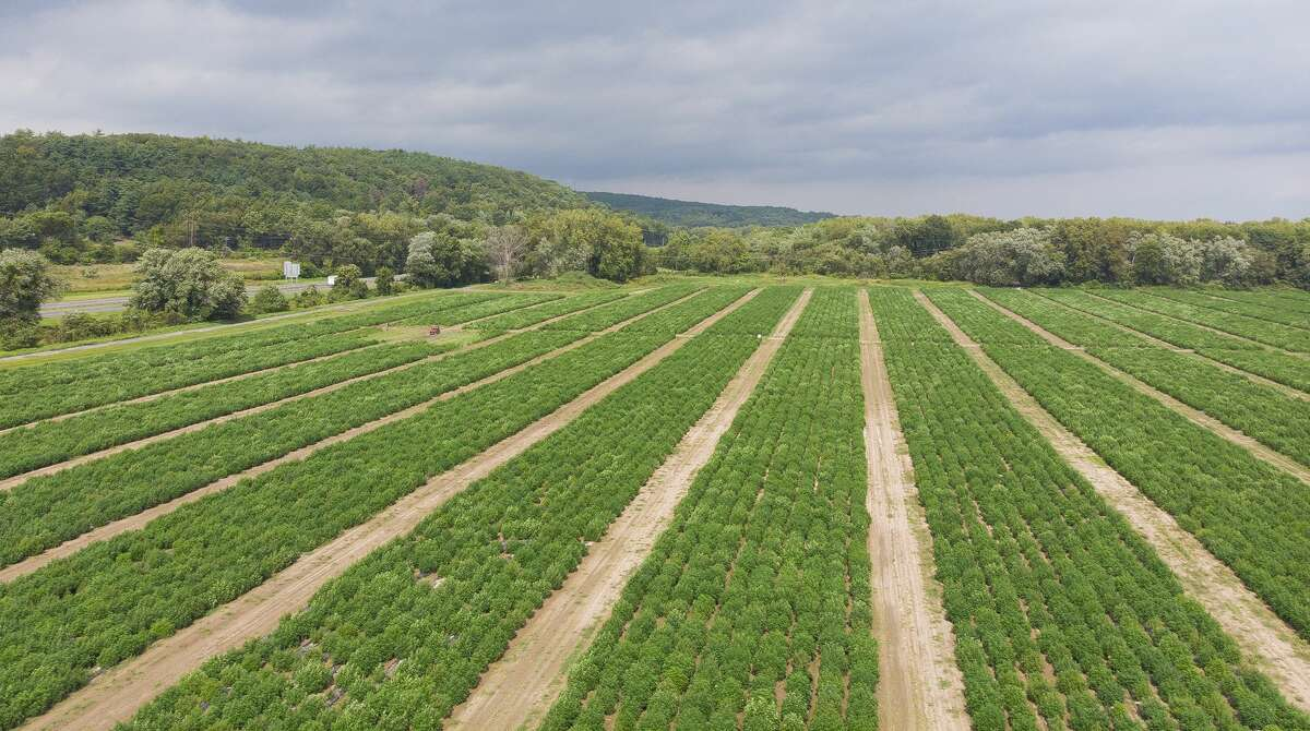 A bird's eye view of Hempire State Growers' crop in 2020. (Provided photo)
