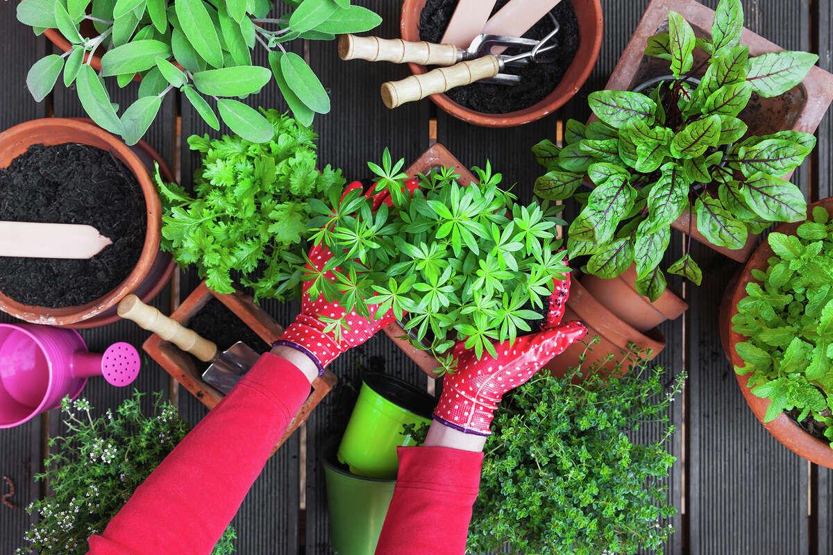VegTrug 8-Pocket Herb Garden, $117.07