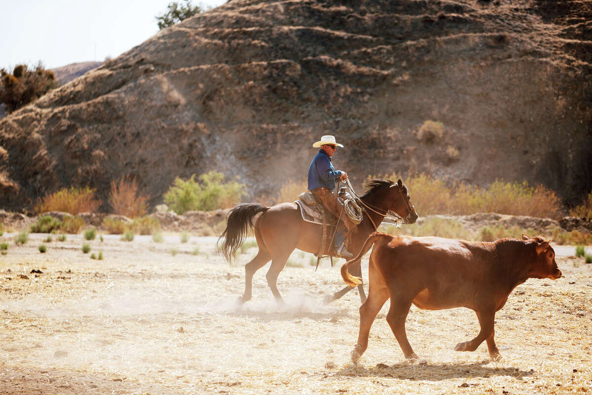 Emery Johnston at the Johnston Ranch in the Cuyama Valley, Calif.