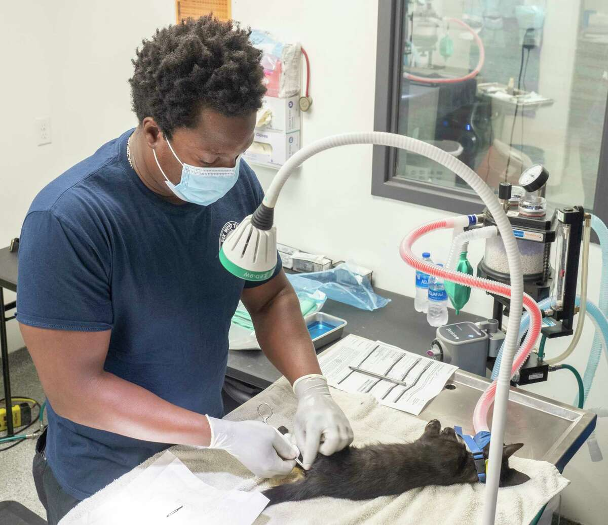 Dr. Willie Taylor, traveling veterinarian from Atlanta, performs multiple spay and neuters 07/28/2021 at Fix West Texas off Princeton Ave. Tim Fischer/Reporter-Telegram