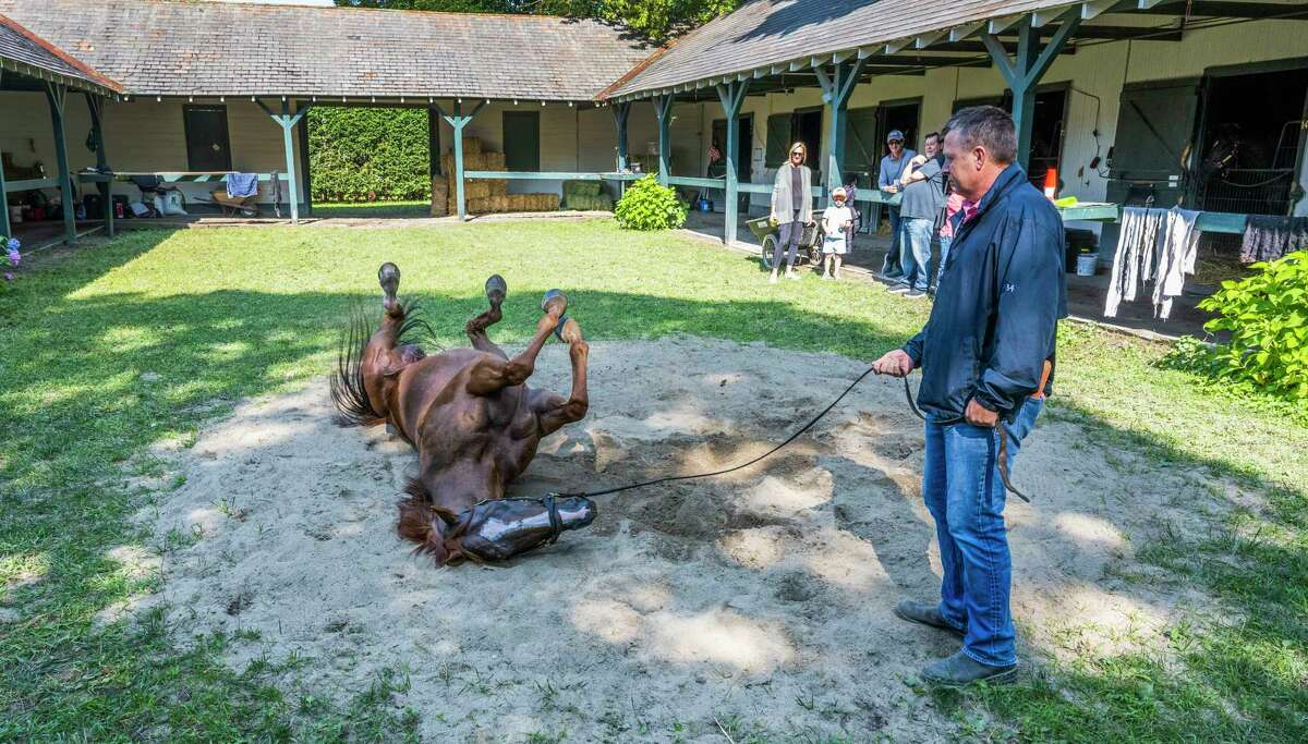 Trainer Ron Moquett give fan favorite and Breeders Cup Champion Whitmore some time to roll in the sand after his bath at The Saratoga Race Course Friday July 23, 2021 in Saratoga Springs, N.Y. Photo special to the Times Union by Skip Dickstei