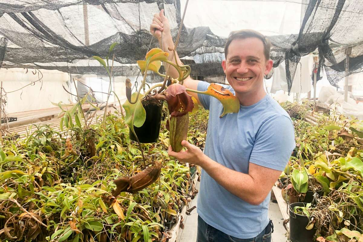 Josh Brown holds a carnivorous plant inside his greenhouse housing thousands of plants in Half Moon Bay, Calif., on July 27, 2021.