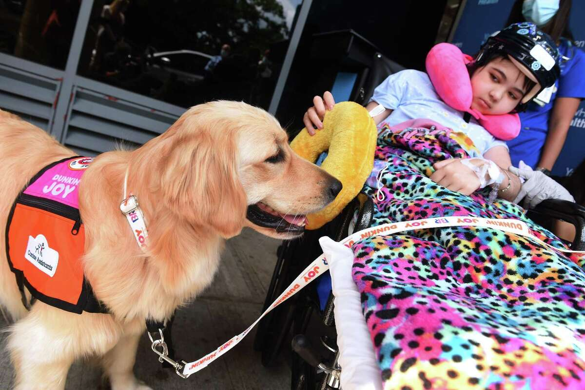 Yale New Haven Children's Hospital patient Bella Chambasis, 14, tries to entice Nana, a 21-month-old golden retriever in-residence therapy dog, with a toy doughnut during after a press conference where Dunkin' franchise owner Frank D'Andrea presented Yale New Haven Children's Hospital with a grant for 100,000 from the Dunkin' Joy in Childhood Foundation on July 28, 2021, for the foundation's Arts for Healing program.