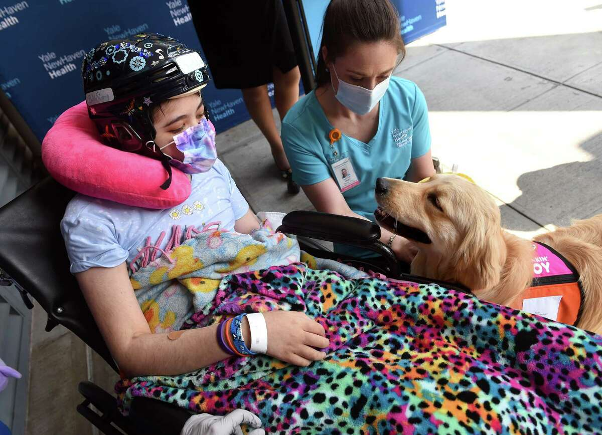 Yale New Haven Children's Hospital patient Bella Chambasis, left, 14, interacts with Nana, a 21-month-old golden retriever in-residence therapy dog, before a press conference where Dunkin' franchise owner Frank D'Andrea presented Yale New Haven Children's Hospital with a grant for 100,000 from the Dunkin' Joy in Childhood Foundation on July 28, 2021, for the foundation's Arts for Healing program. At top is Nana's primary handler, Child Life Specialist Caitlin Leary.