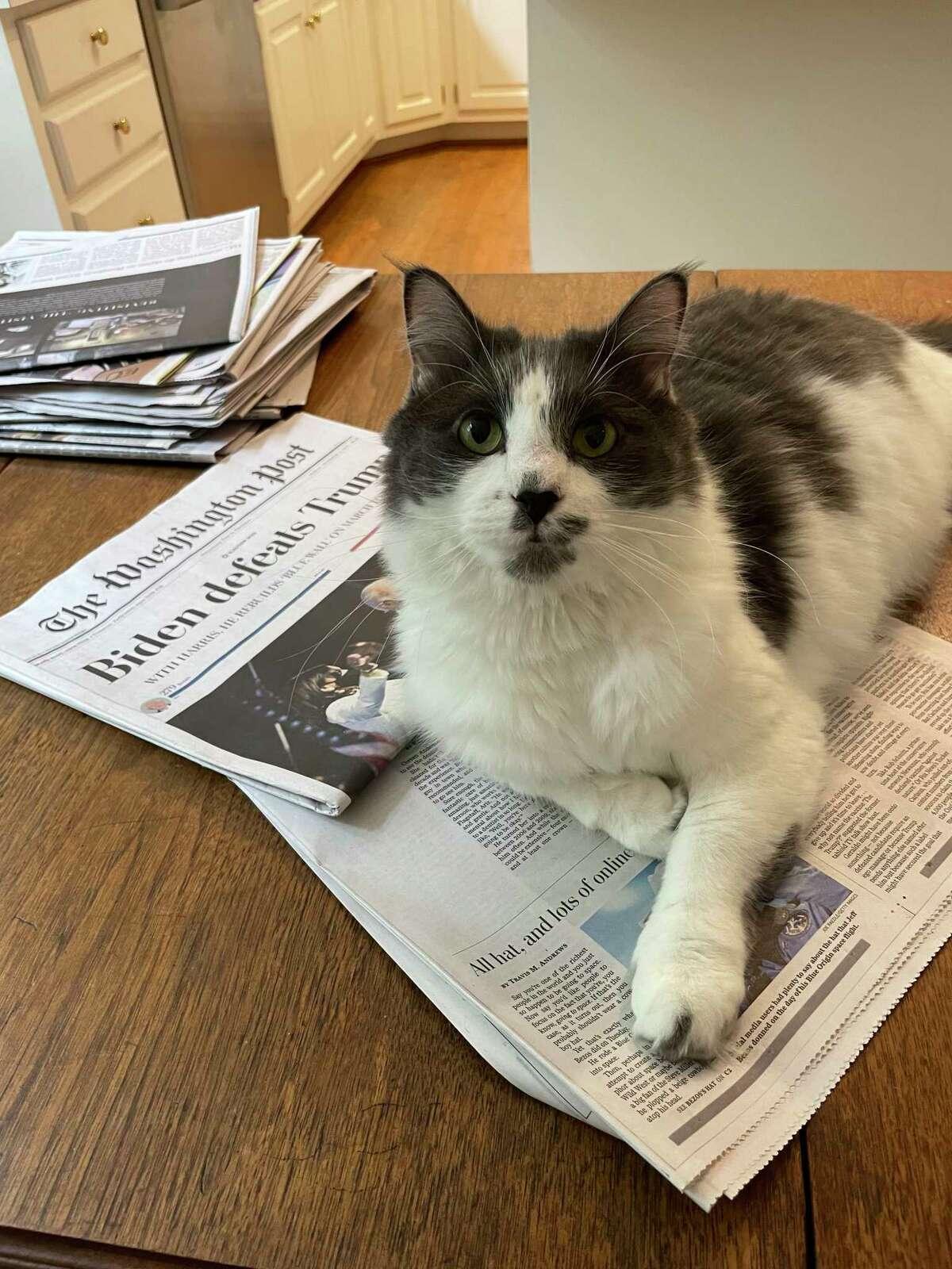 Sherwood the cat has so many phobias - doorbells, aluminum foil - that owners Sue Roberts and Richard McCluney of Williamsburg, Va., are eternally vigilant.