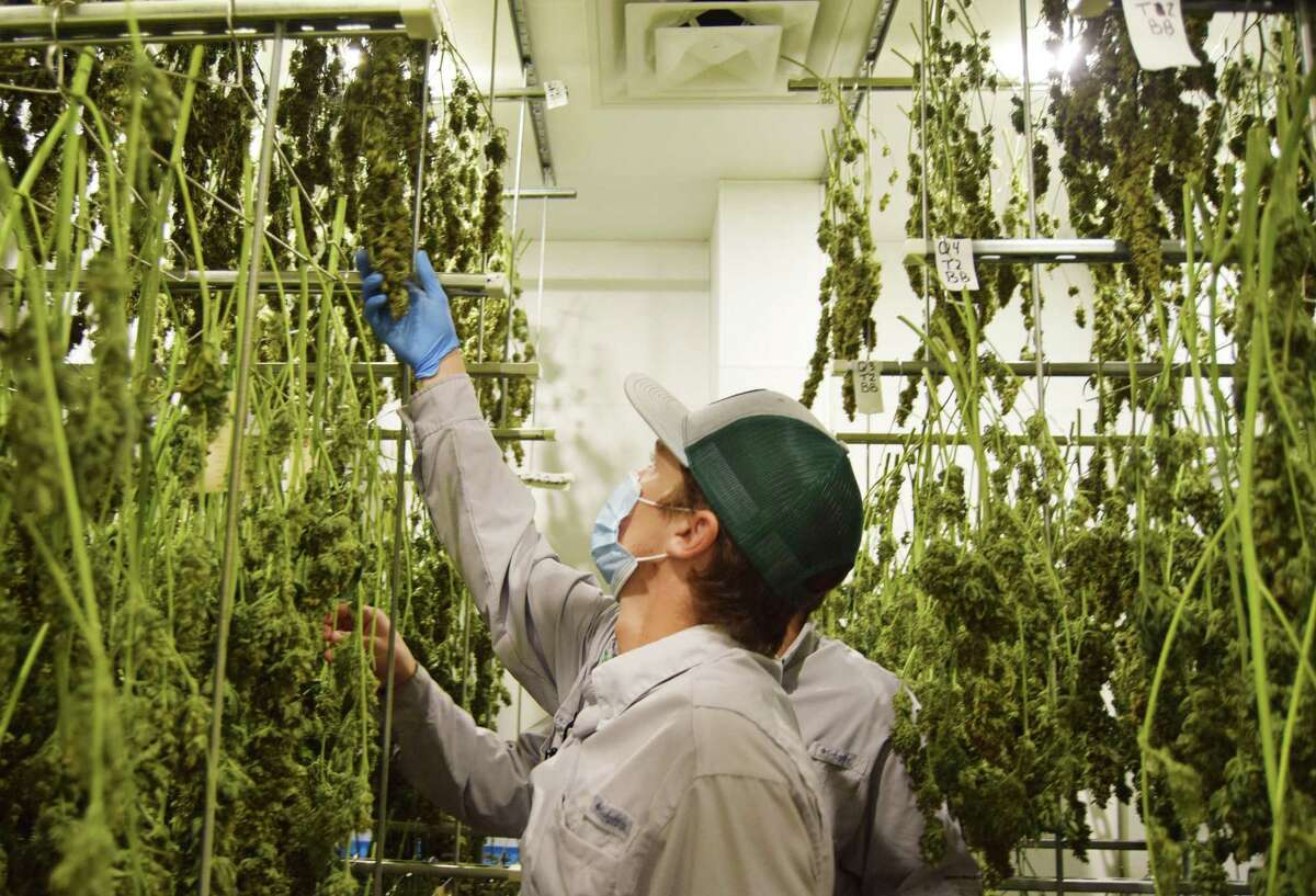 New Canaan Planning and Zoning Commission is considering regulations on marijuana facilities, much like this one pictured in Texas.