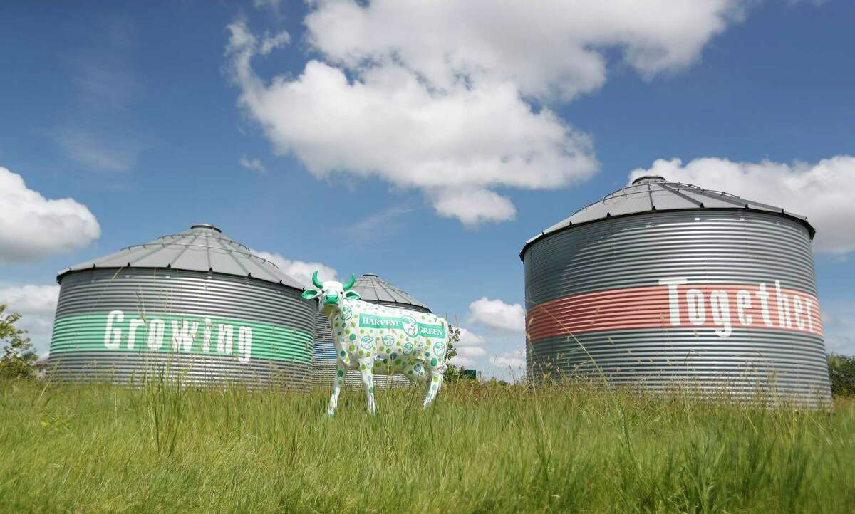 Painted cow statutes with silos greet visitors near the Farmhouse on the property of Harvest Green, the farm-focused community along the Grand Parkway at West Airport Boulevard in Richmond, which is growing, Friday, July 2, 2021, in Richmond.