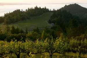 A Napa Valley vineyard.