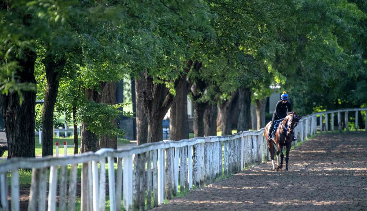 A horse trained by Saffie Joseph Jr. gallops under the trees on the training track circling Clare Court at The Saratoga Race Course Thursday July 29, 2021 in Saratoga Springs, N.Y. Photo special to the Times Union by Skip Dickstein