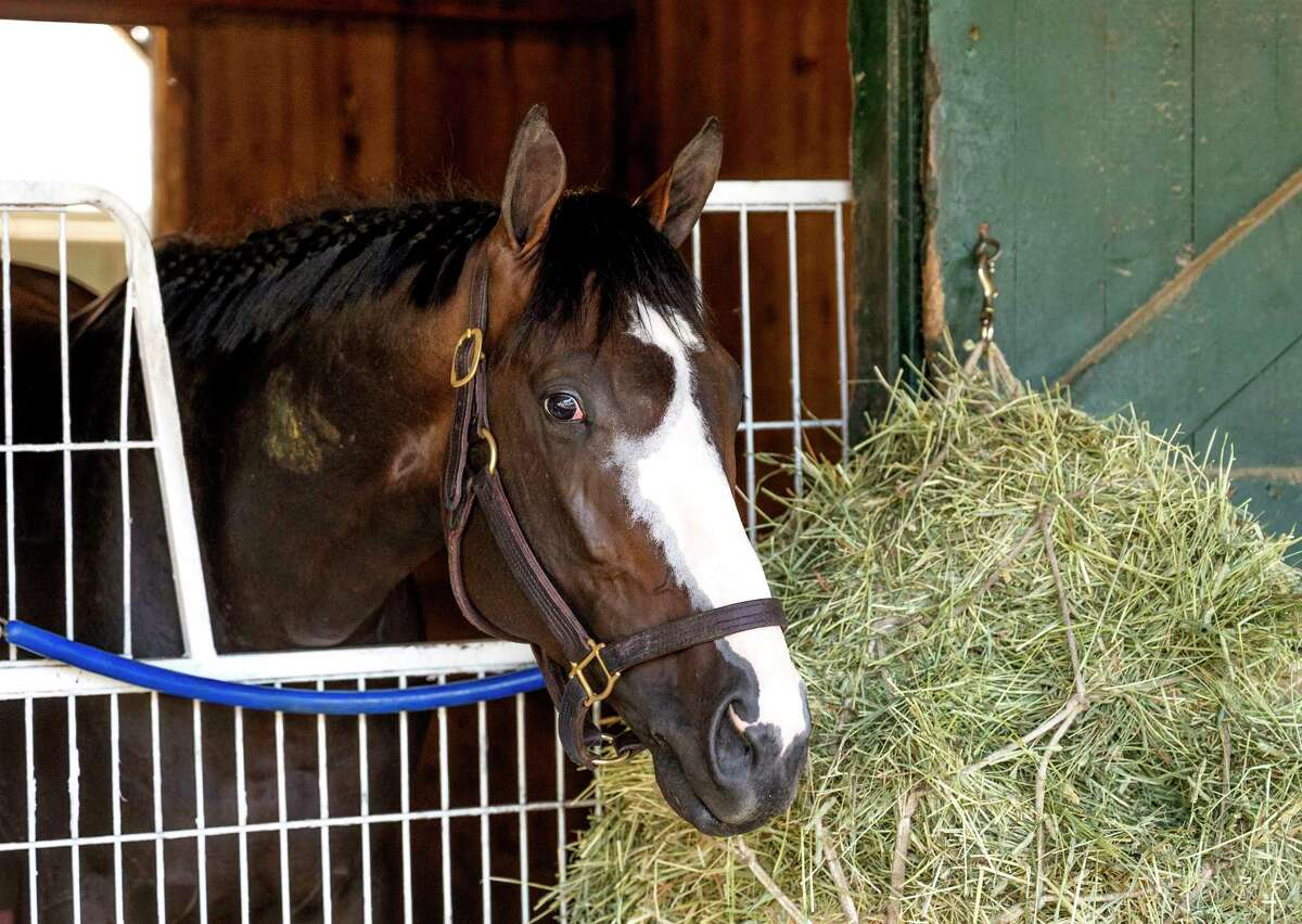 Masqueparade who will make his next start in the Jim Dandy and is trained by Al Stall hangs out in his stall at The Saratoga Race Course Thursday July 29, 2021 in Saratoga Springs, N.Y. Photo special to the Times Union by Skip Dickstein