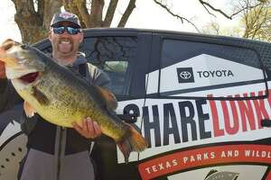 In 2021, the Texas Parks and Wildlife Department's Toyota ShareLunker Program produced 271,872 fingerlings to benefit Texas public waters. The program collects large bass 12 pounds or over from Texas anglers to use for spawning.
