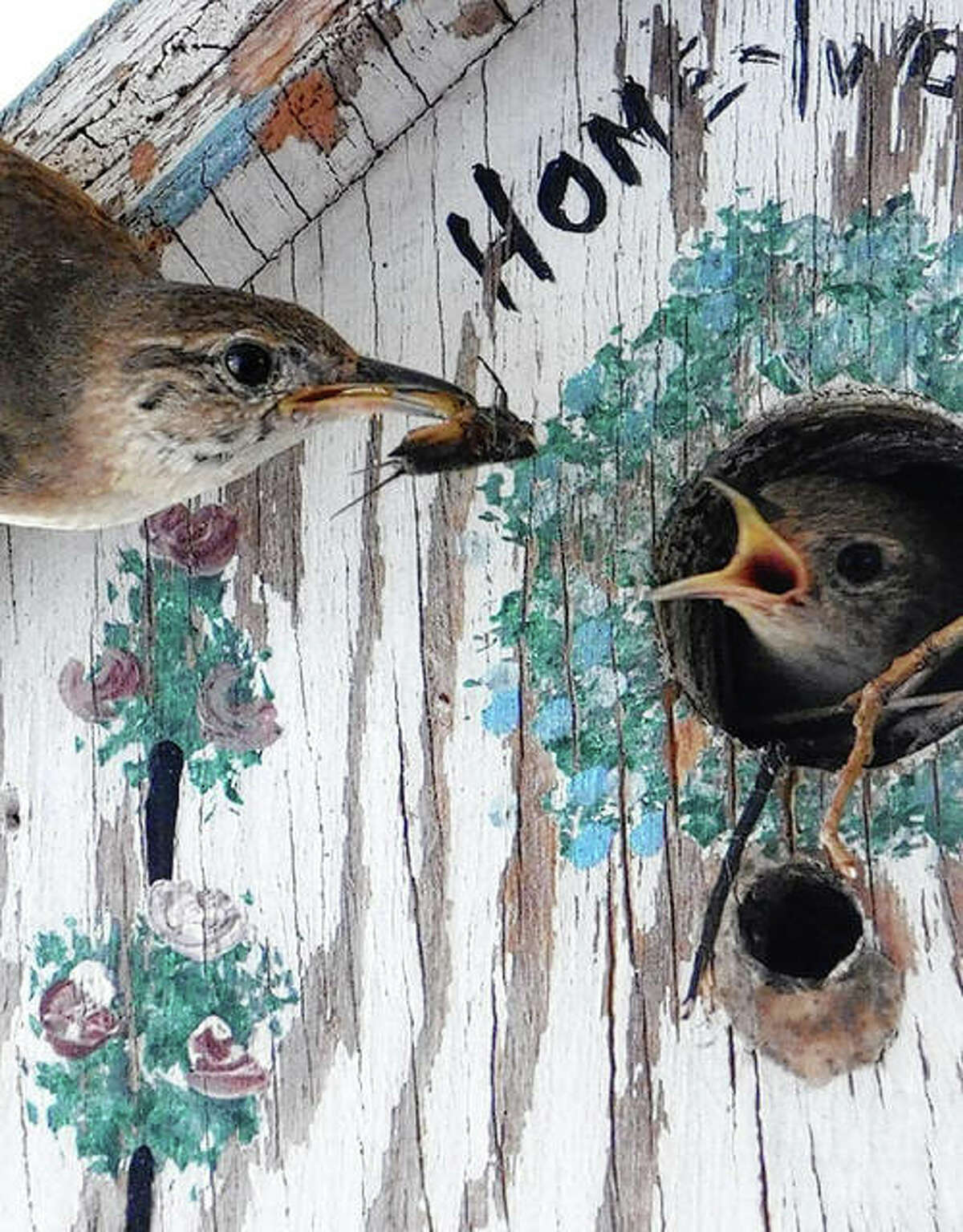 Reader Mary Lacy was sitting on her porch and captured a baby bird receiving food from its parent.