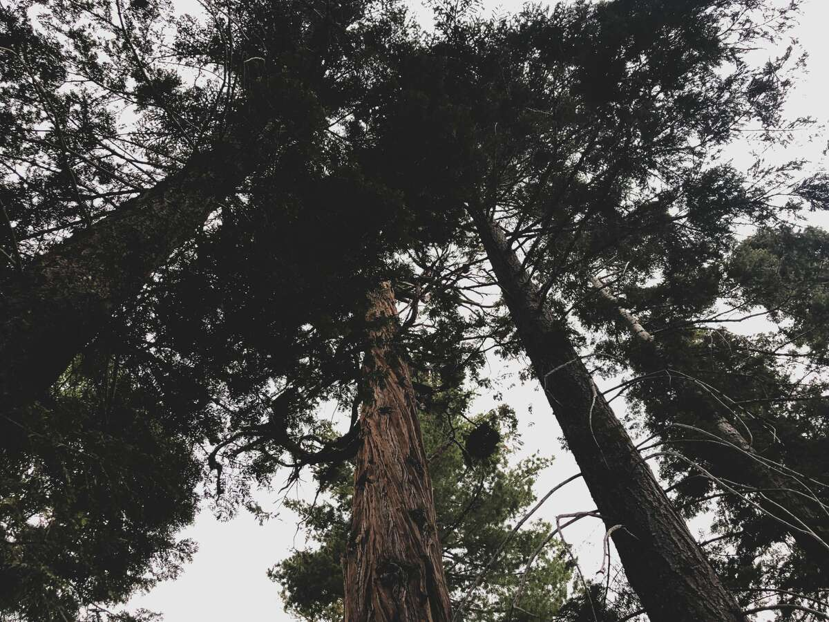 Tall trees surround the campsites at Bliss State Park.