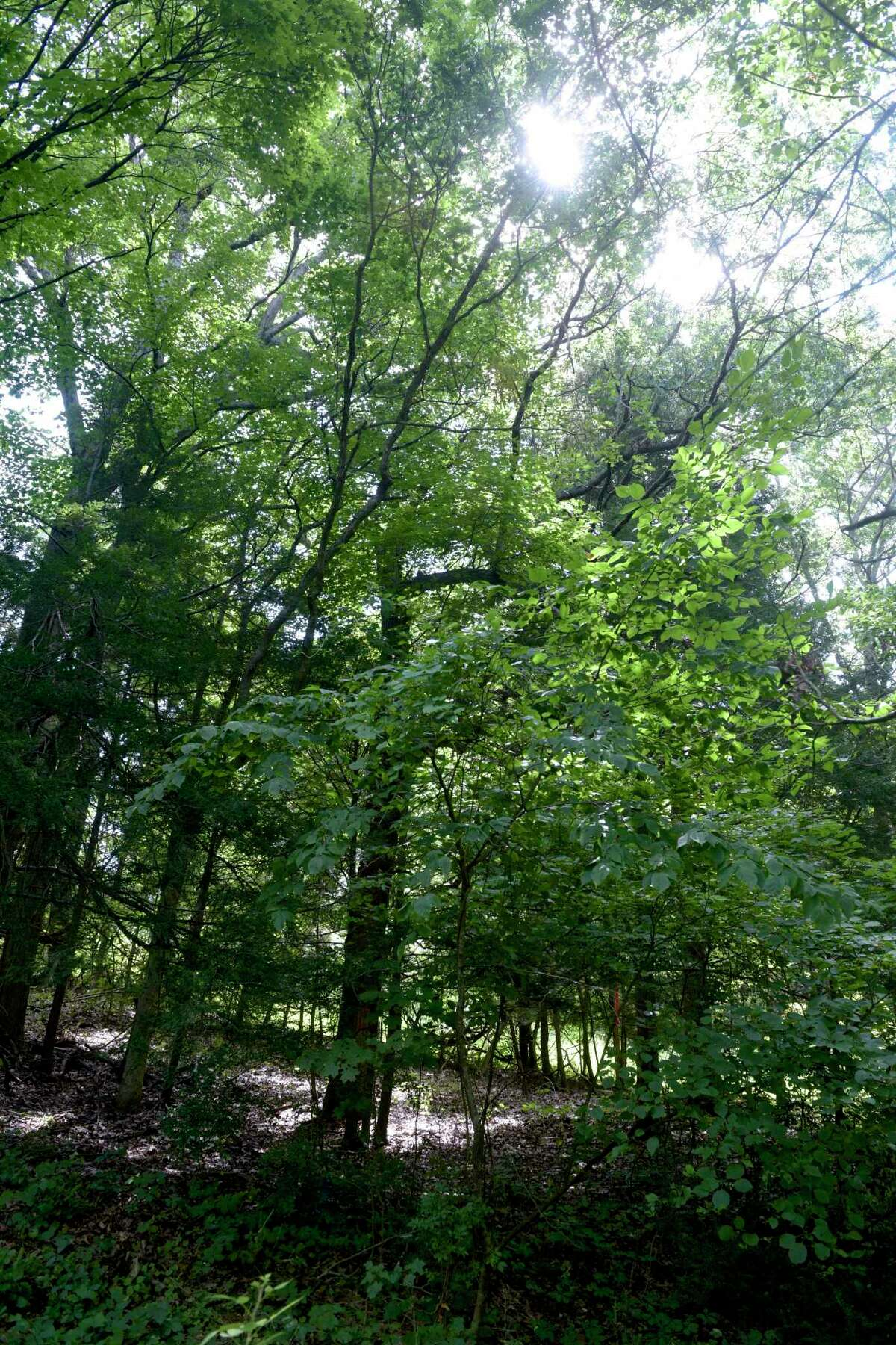 """Kelly Douthitt-Wilson and her neighbors are upset that Eversource plans to take down trees at the rear of their properties on Old Lantern Road. Eversource said crews will be removing """"tall-growing species from the rights of way and cut branches extending into the rights of way."""" Pictured on Friday in New Milford."""
