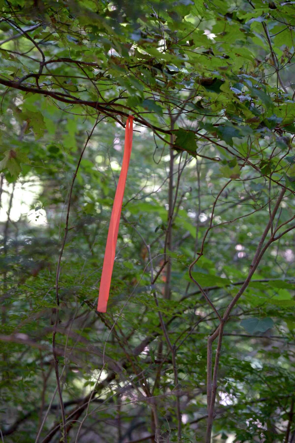 """Kelly Douthitt-Wilson and her neighbors are upset that Eversource plans to take down trees at the rear of their properties on Old Lantern Road. Pink ribbons mark the line that trees will be removed to. Eversource said crews will be removing """"tall-growing species from the rights of way and cut branches extending into the rights of way."""" Friday, July 30, 2021, New Milford, Conn."""