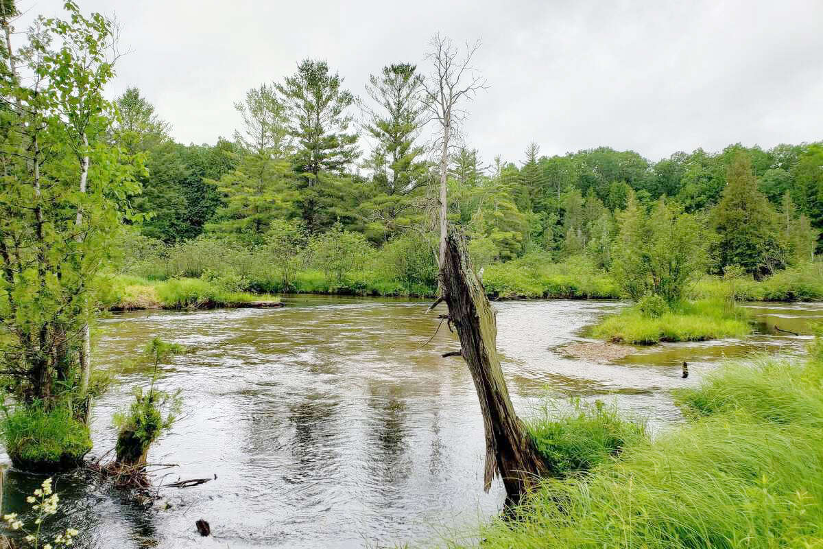 According to MDHHS, ticks generally prefer shady, moist areas in wooded and grassy locations. A plethora of blacklegged ticks can be found amidst the tall grasses that border this section of the Little Manistee River near Little River Road in Stronach Township.