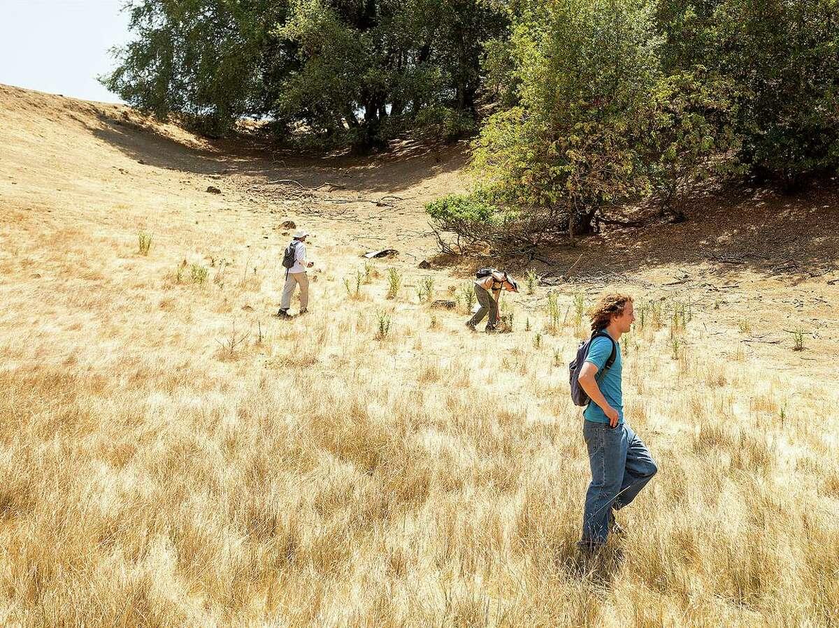 Volunteers comb Pleasanton Ridge Regional Park in July for Philip Kreycik.