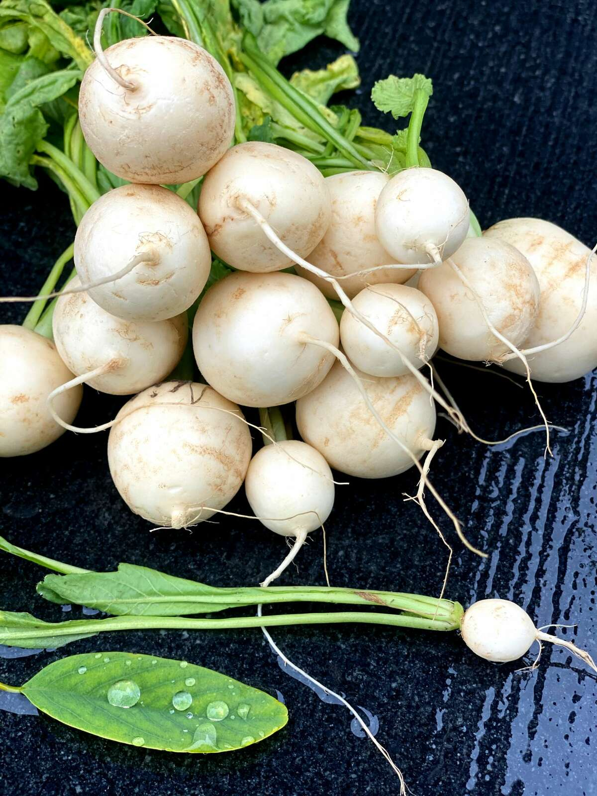 Developed in Japan in the 1950s in response to food shortages after World War II, Hakurei turnips have a delicate, crunchy, fruity taste, making them just as versatile raw or cooked. (Susie Davidson Powell/for the Times Union)