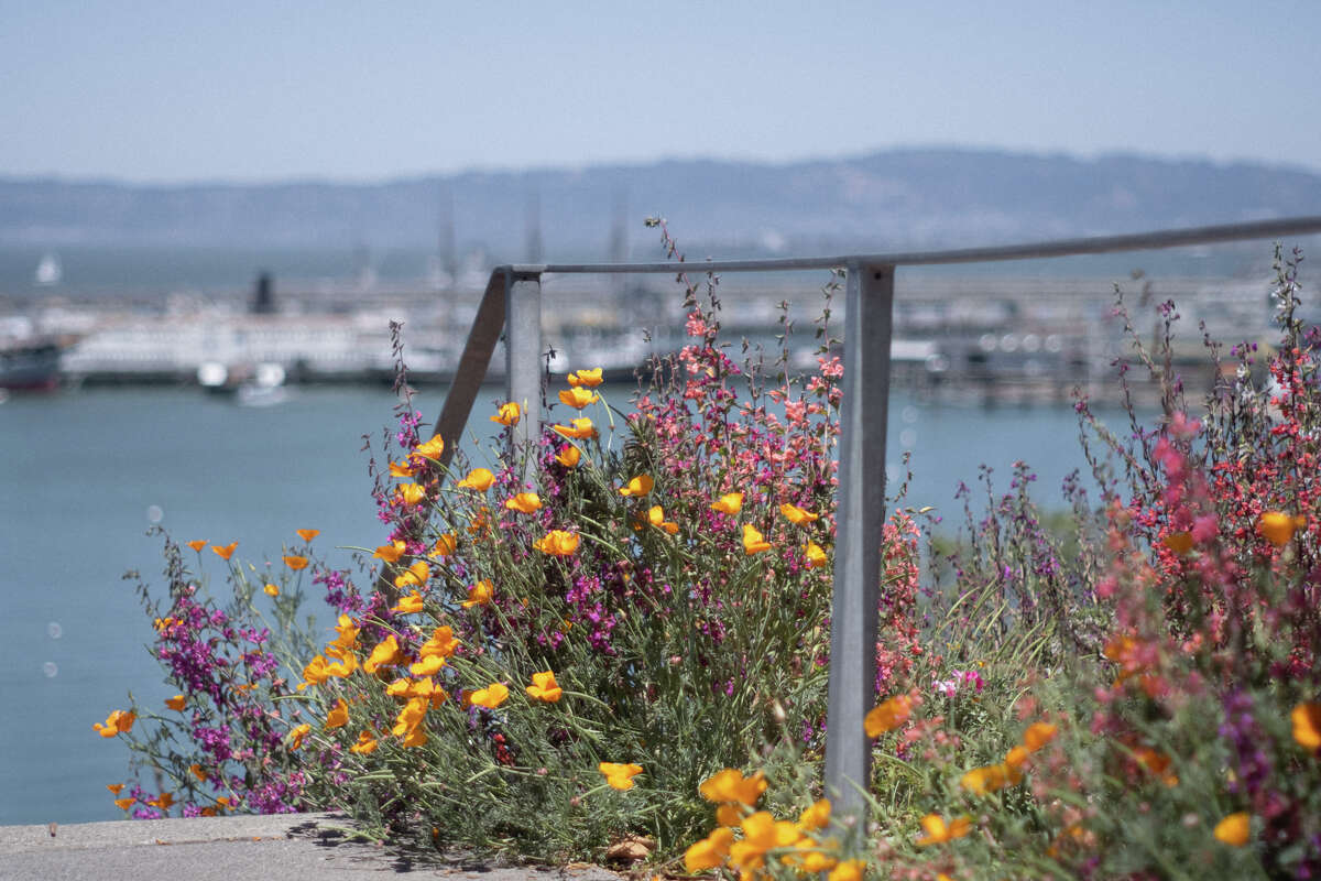 A Fort Mason area with epic views is opening to the public for first time ever.