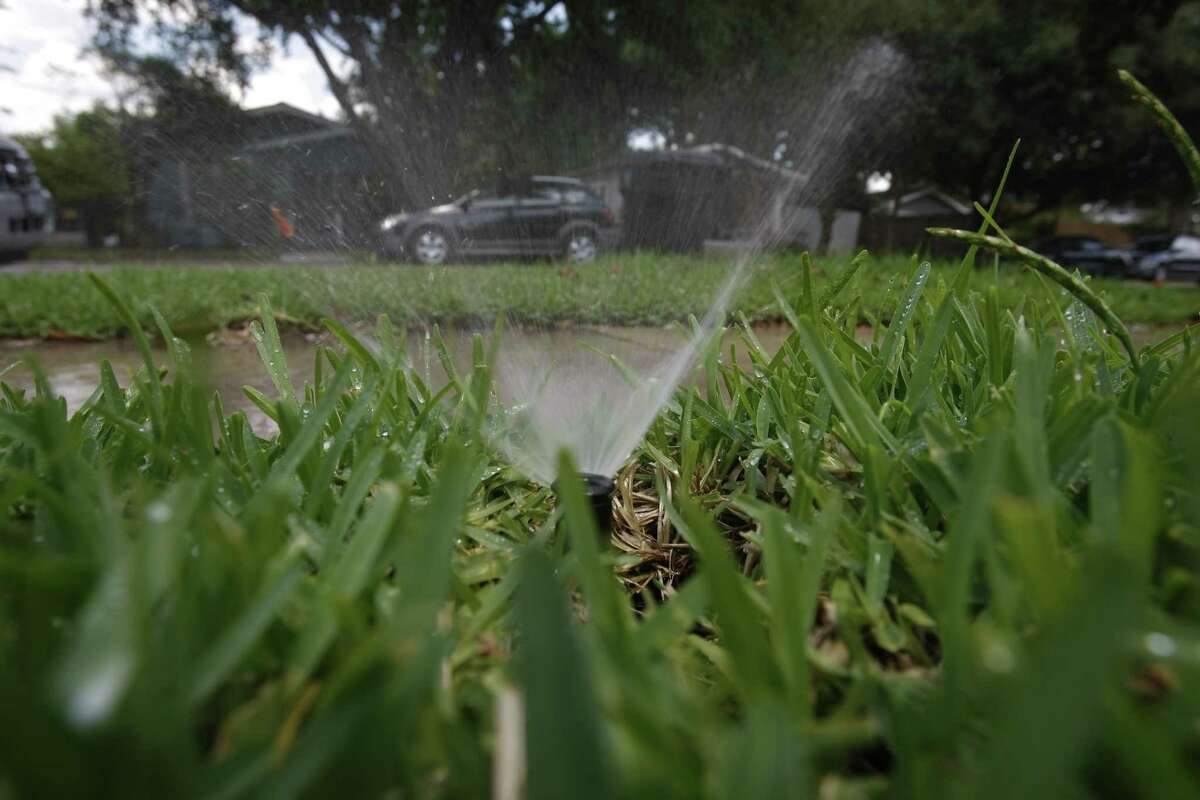 If your grass looks dry, it might need more water, or it could be chinch bugs.
