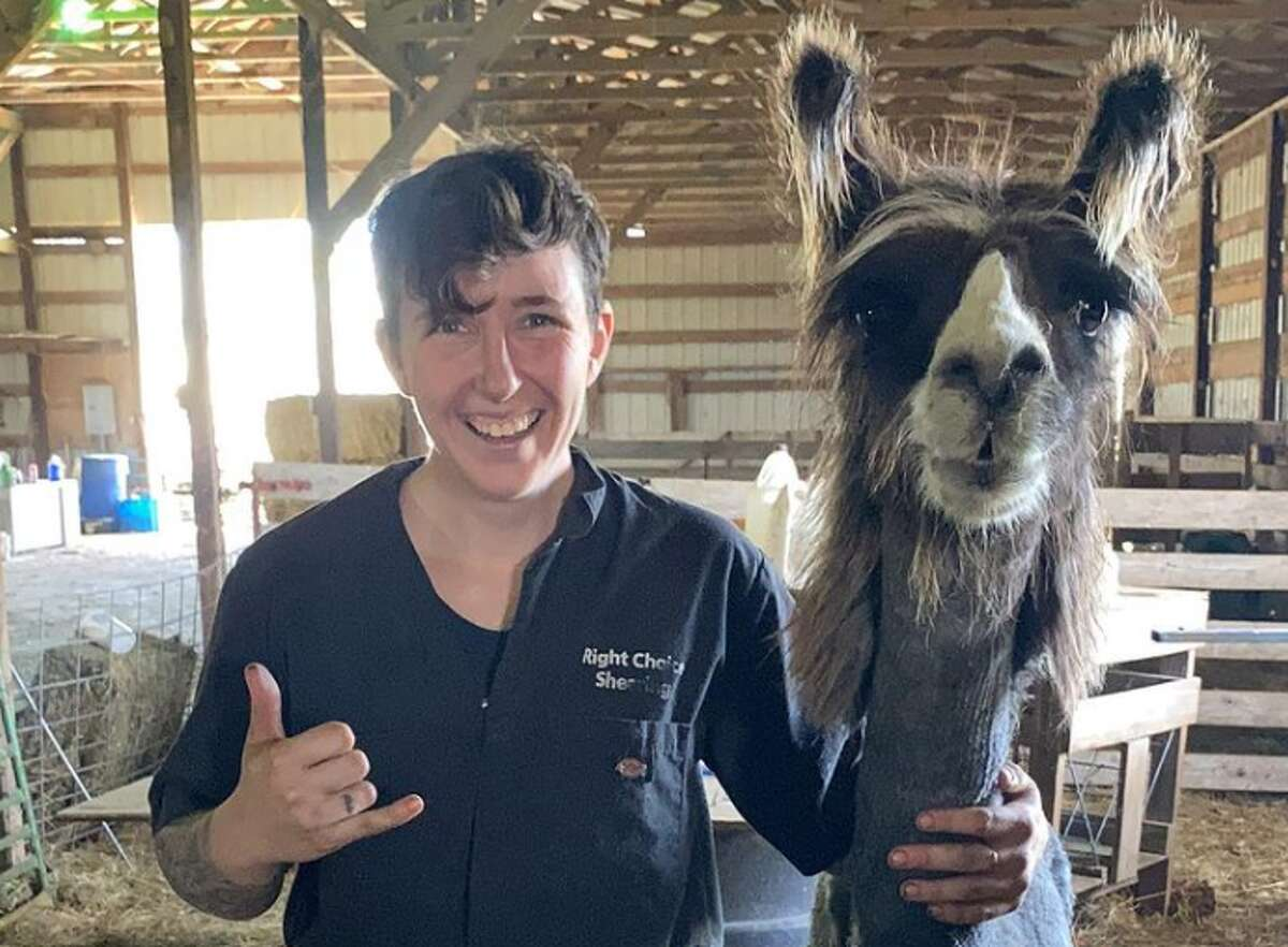 Katie McRose, known as @rightchoiceshearing on TikTok, has amassed close to 2 million followers on the video app and another 43,000 on Instagram in just a few months. She and her wife, Darian, went full time with the business four years ago. They now offer their shearing services to nine states, covering nearly 600 farms, working with more than 6,000 animals, cutting pounds and pounds of fleece and fur.
