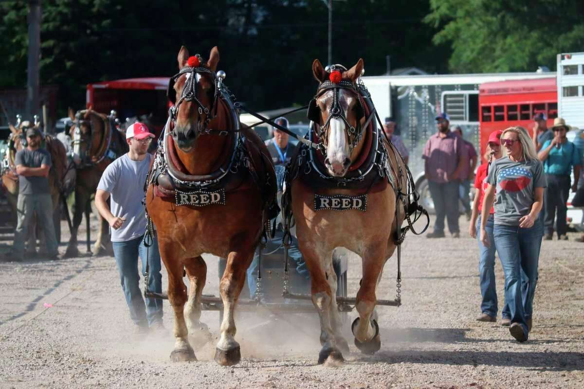 Ben Reed, whose family has been involved with horse pulling for generations, is organizing this year's draft horse pull event at the Manistee County Fair. (File photo)