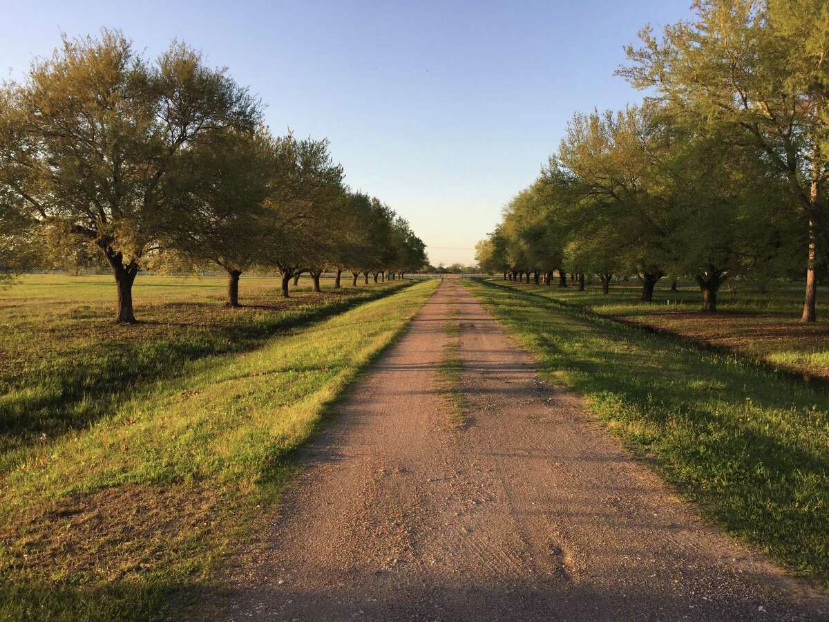 A former Pearland ranch slated to make way for 950 homes in a master-planned community called Massey Oaks.