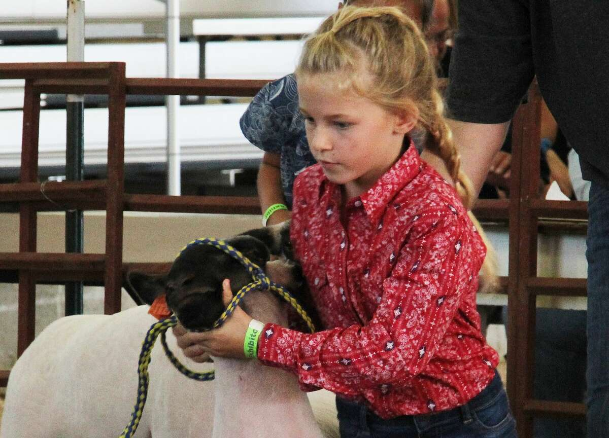The 2021 Huron Community Fair kicked into high gear on Monday with harness racing, the rabbit show, KOI drag racing, the 4-H horse show, Elkton Lions Club bingo, the sheep show and a silent auction at the Merchant Building.