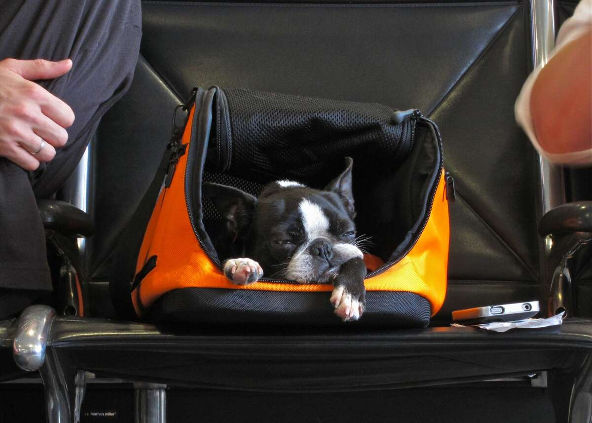 A dog waits in its carry-on container at the airport in Atlanta, Georgia.
