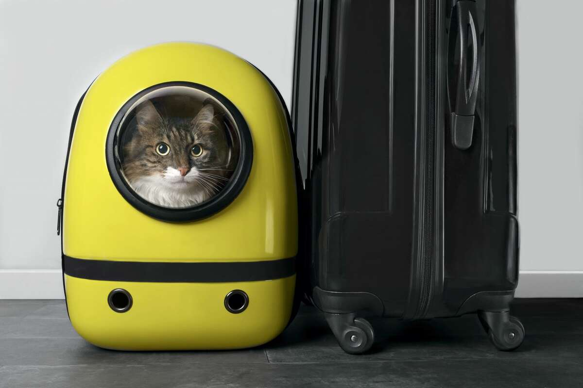 Pictured is a cat in a yellow cat carrier.