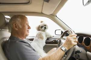 A man and his small dog traveling.