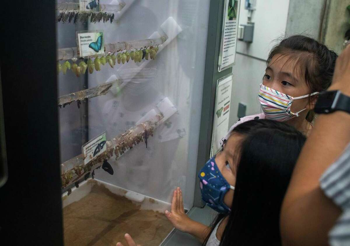 Emma Szeto (right) and Olivia Szeto are engrossed in the California Academy of Sciences butterfly exhibit. Mask mandates are in effect once again because of increasing cases of COVID-19 in the Bay Area.