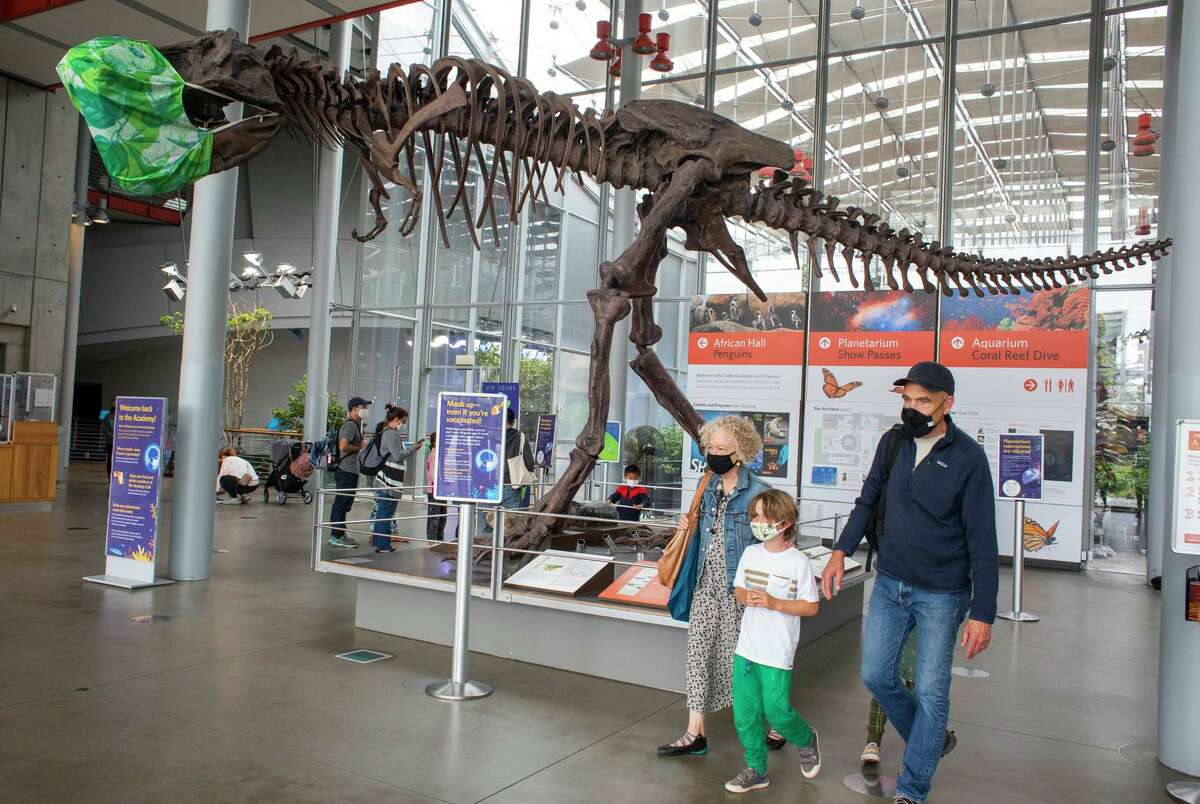 Visitors appreciate California Academy of Sciences exhibits on Tuesday, the day that mask mandates are in effect once again because of increasing cases of COVID-19 in the Bay Area.
