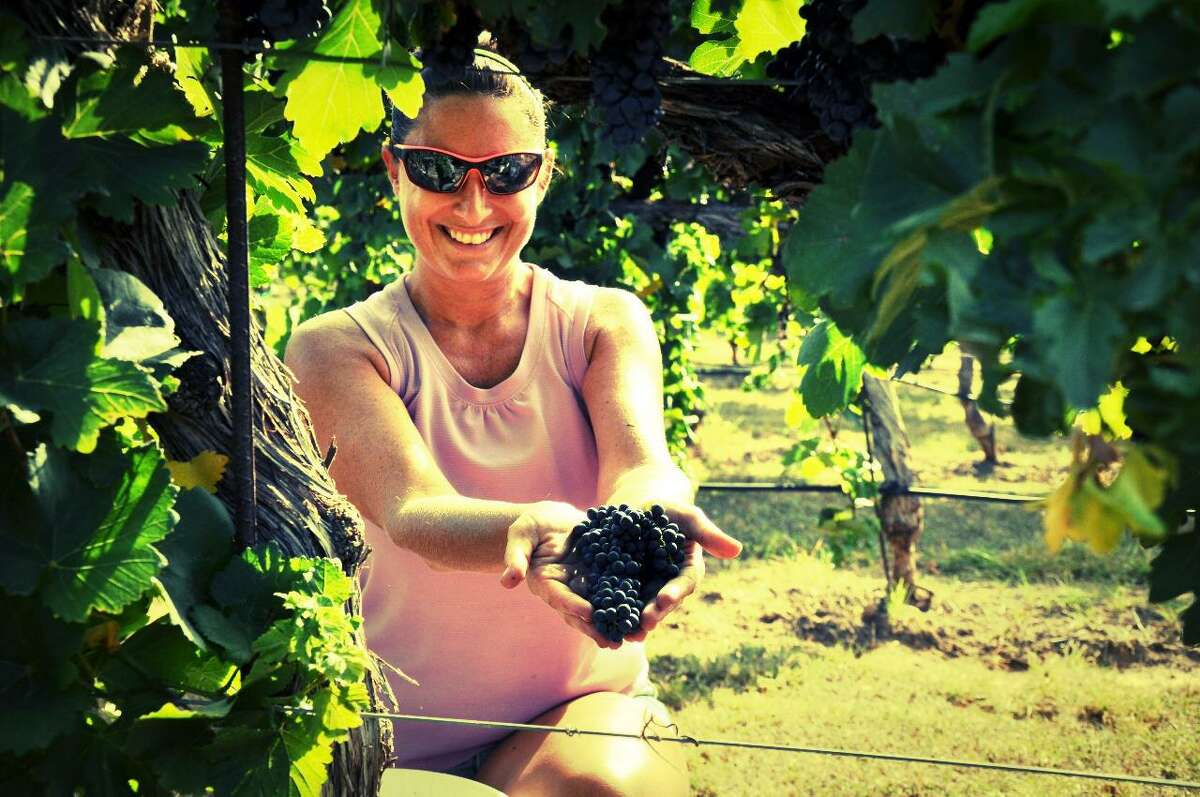 Flat Creek Estate Winery and Vineyards had an early harvest last weekend in the Texas Hill Country.