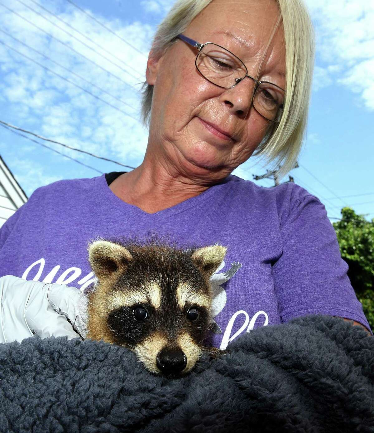 Eunice Demond of Little Rascals Rescue and Rehabilitation holds a six-week-old raccoon behind her home in Guilford on July 1, 2021 that was found wandering in a road in East Haven.
