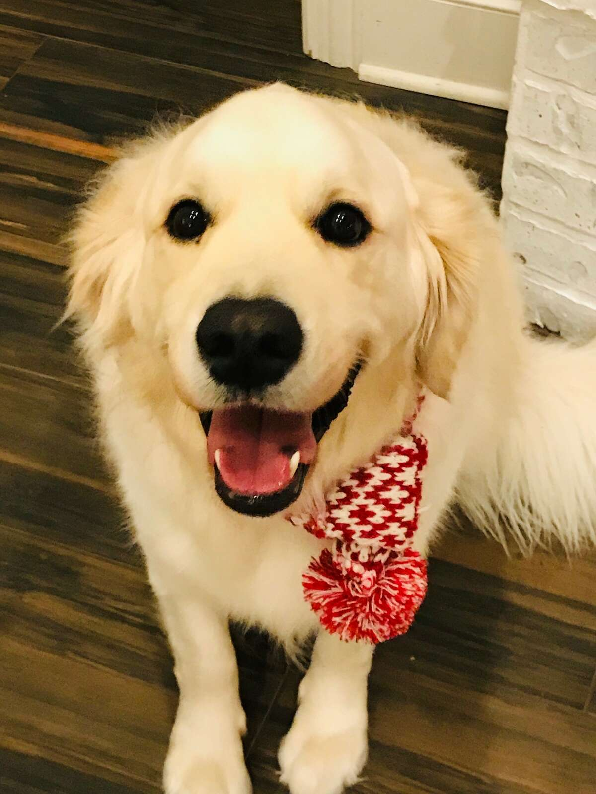 Owner Julie Aasmyr said 4-year-old Golden retriever Duke was a very easy to train dog who loved to please and was adoring of her children.