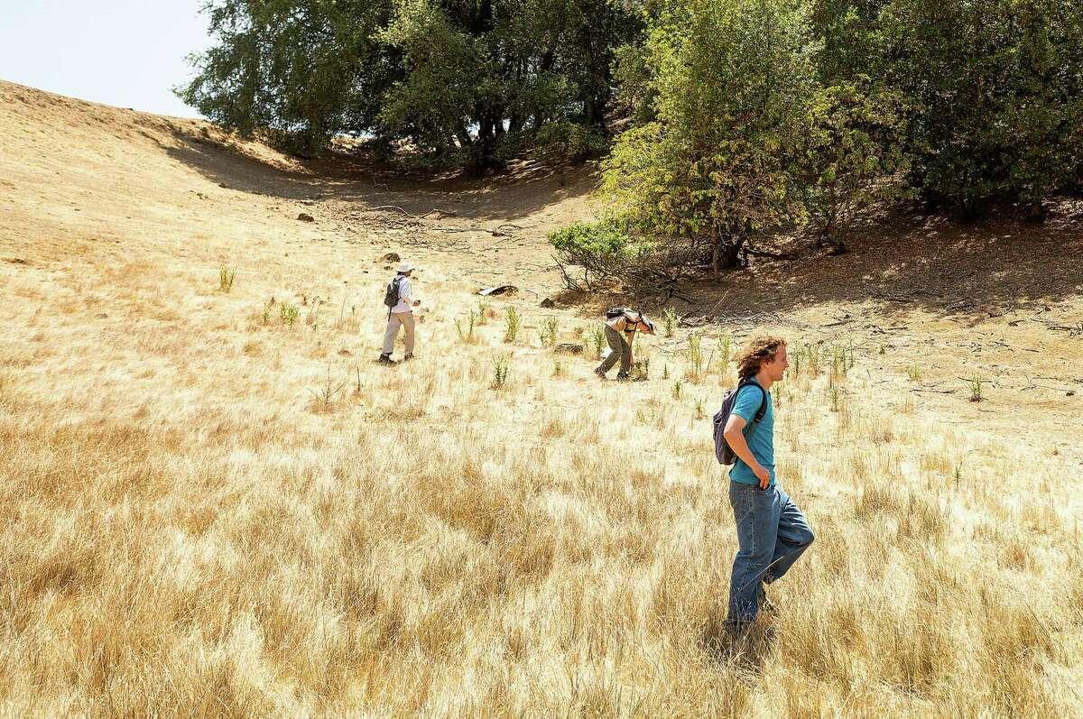 Volunteers search Pleasanton Ridge Regional Park for missing runner Philip Kreycik on Saturday, July 31, 2021, in Pleasanton, Calif.