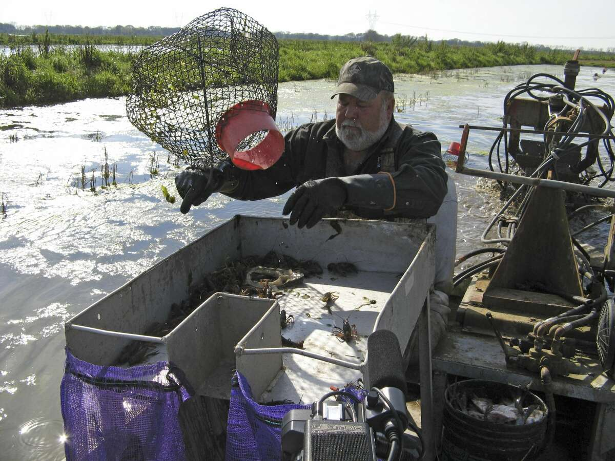 Crawfish farmer David Savoy harvests crawfish from ponds near Church Point, LA on March 13, 2008 (Photo by Alan Henkel/NBCU Photo Bank/NBCUniversal via Getty Images via Getty Images)