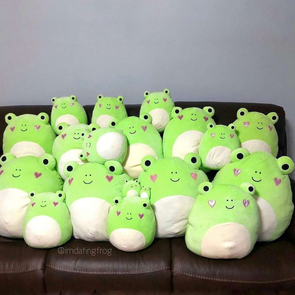 A small sample of the more than 200 mostly frog Squishmallow owned by Jessica Dao,. She started collecting in November and has bought and traded with collectors across the United States and as far away as Canada, Australia, Mexico and the Philippines.
