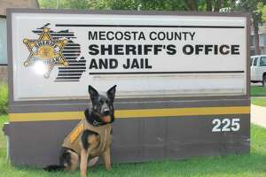 Pictured is K9 Officer Zeke in his new protective vest (Courtesy photo from the Mecosta County Sheriffs Office)