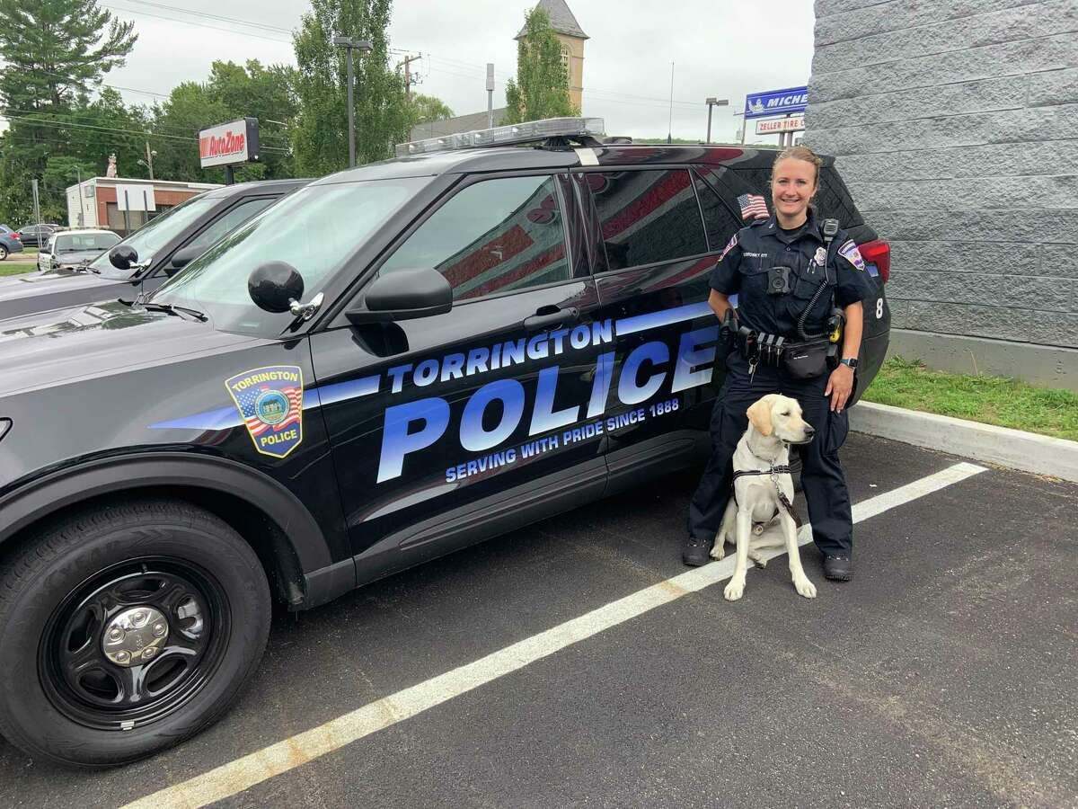 Addison, a one-and-a-half-year old yellow Labrador retriever, has joined the Torrington Police Department as its first therapy dog. Addison is pictured with handler Officer Hannah Yabrosky.