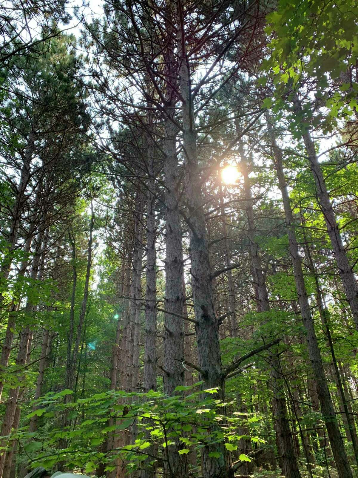 """Forest bathing is coined from the Japanese term, """"shinrin-yoku,"""" which broadly means taking in, through all of one's senses, the forest atmosphere. (Courtesy Photo)"""